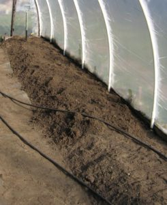 Sandy soil with plenty of organic matter added